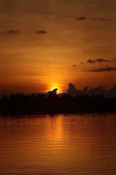 Diane Merkle - Morning Gold