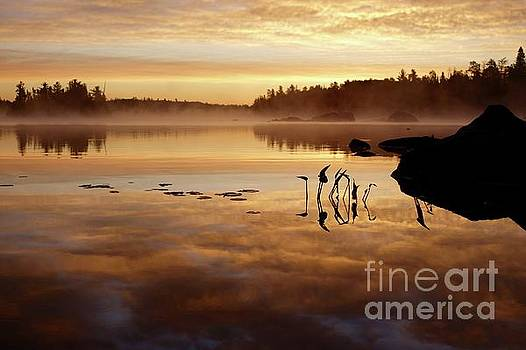 Morning Gold by Sandra Updyke