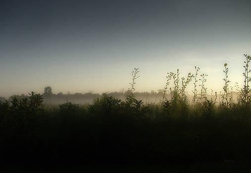 Morning Ground Fog by Cynthia Lassiter