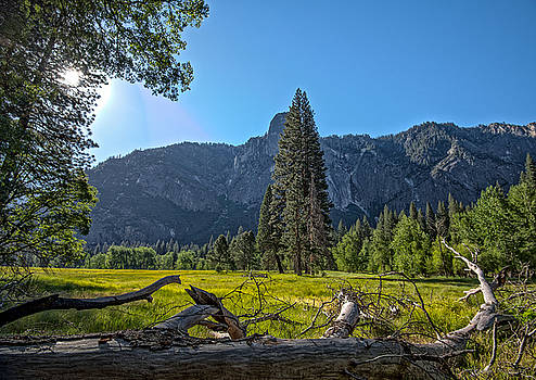 Morning in The Meadow by Phil Abrams