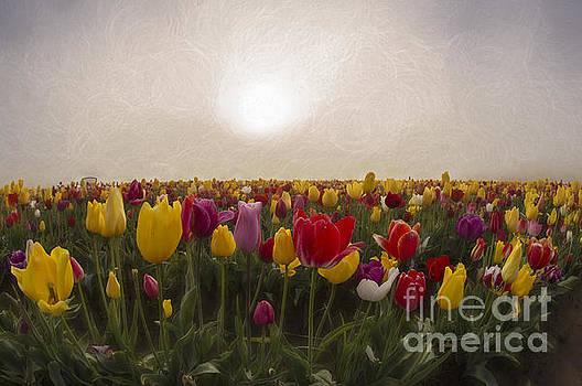 Morning Light by Billie-Jo Miller