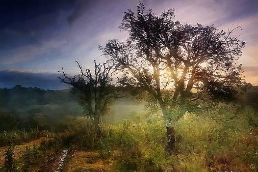 Morning light by Gun Legler