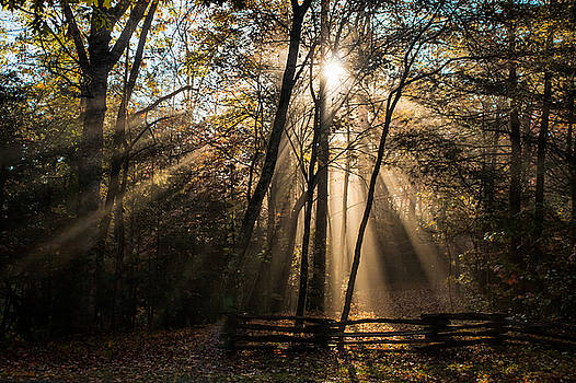 Morning Light by Lynne Jenkins