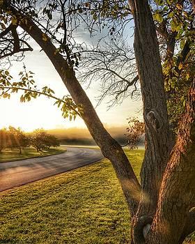 Morning Light by Nikki McInnes