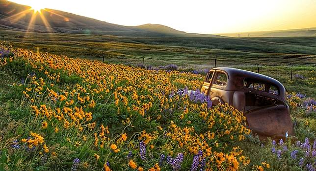 Morning light on the old rusty car by Lynn Hopwood