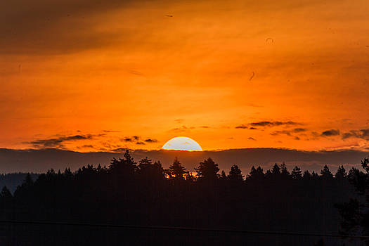 Morning on Fire by Danielle Silveira