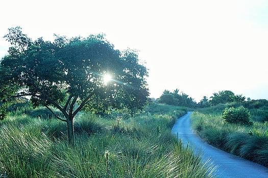 Morning Path by Ruthann Carlson
