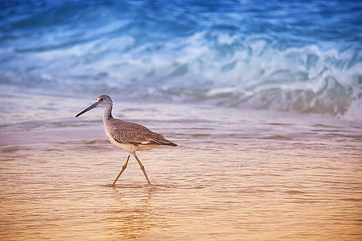 Morning Sandpiper  II by Daphne Sampson