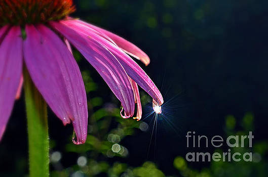 Morning Sun in a Dewdrop by Lila Fisher-Wenzel