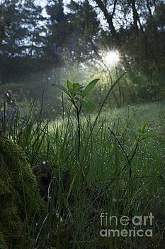 Morning Sunbeam by Michael Lesiv
