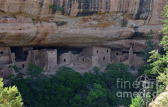 Morning View of Cliff House Mesa Verde by Debby Pueschel