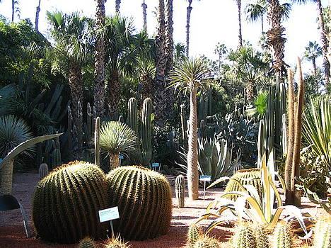 Yvonne Ayoub - Morocco Majorelle Gardens 03