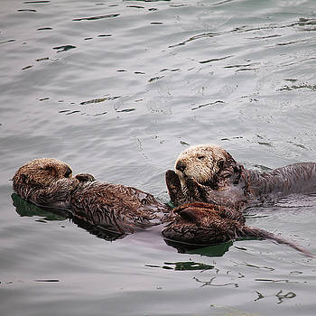 Art Block Collections - Morro Bay Sea Otters