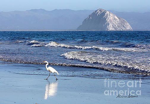 Morro Egret by Alison Salome
