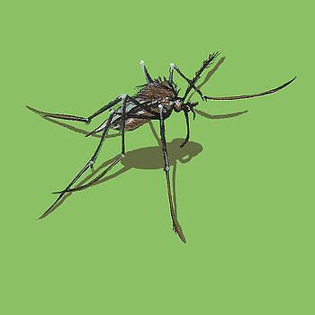 Mosquito by Jude Labuszewski