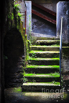 Moss Covered Stairs  by George Oze