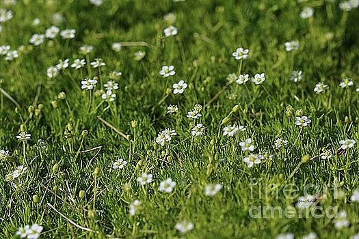 Moss flowers by Yumi Johnson