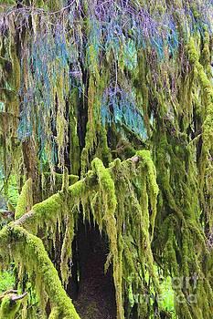 Moss Haven  by AR Annahita