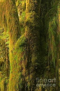 Adam Jewell - Moss In The Hoh