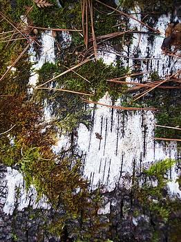 Moss on Birch I by Anna Villarreal Garbis