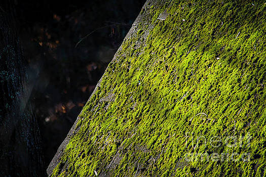 Moss on the Roof  by JW Hanley