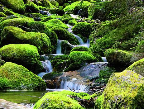 Moss Rocks and River by Raymond Salani III