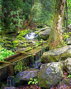 Marty Koch - Mossy Creek