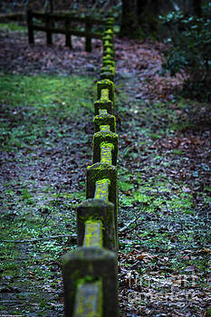 Mossy Fence by Mitch Shindelbower