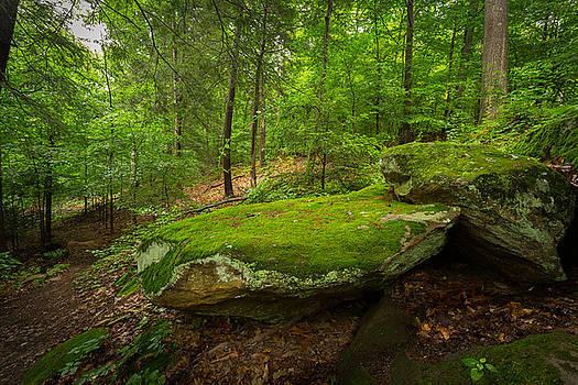 Mossy Rocks In Little Creek Park by Shane Holsclaw