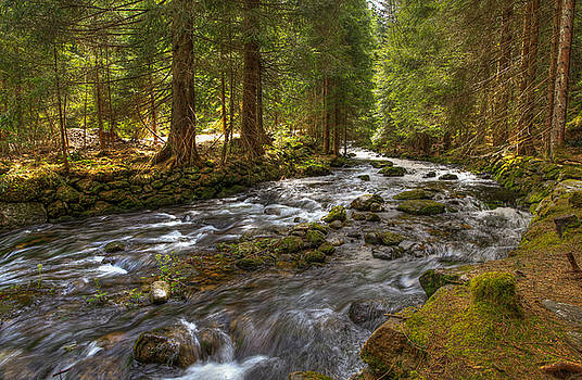 Mossy Stream by Sean Allen