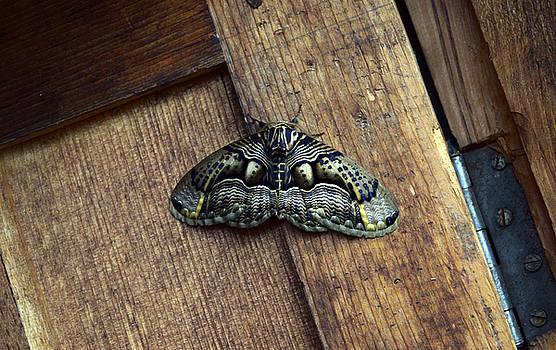 Moth by Sumit Mehndiratta