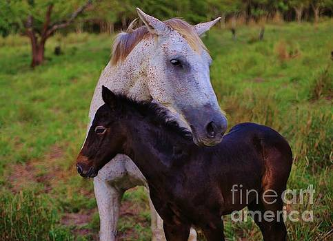 Mother and Colt by Craig Wood