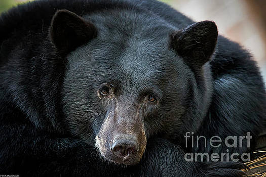 Mother Bear by Mitch Shindelbower