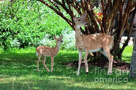 Mother Deer and Fawn by Ella Kaye Dickey