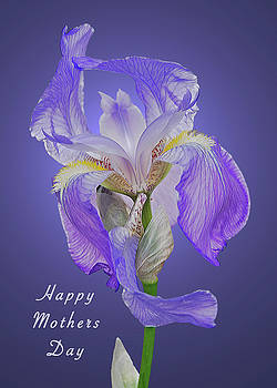Michael Peychich - Mothers Day Card 7