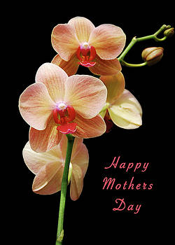 Michael Peychich - Mothers Day Card 8