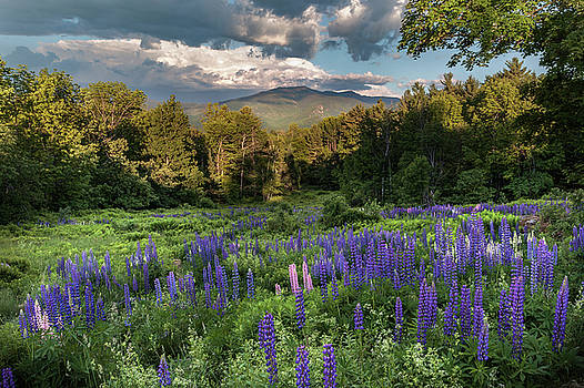 Mountain Blooms by Bill Wakeley