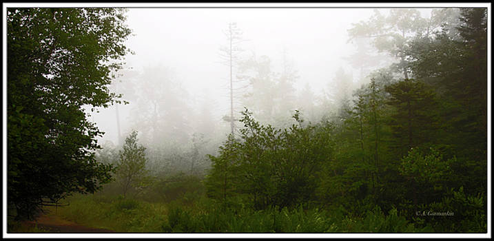 Mountain Forest Thicket in Fog by A Gurmankin