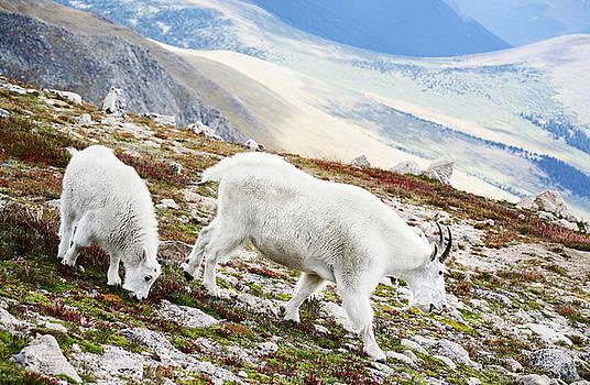 Marilyn Hunt - Mountain Goats 1