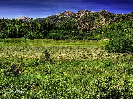 Mountain Meadows by David Simpson