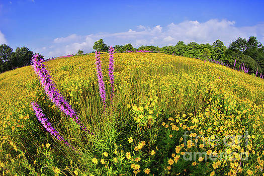 Mountain Of Summer Flowers In The Blue Ridge by Dan Carmichael
