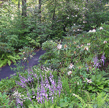 Patricia Taylor - Mountain Trail in Flower Fields