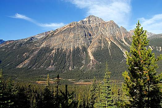 Larry Ricker - Mountain View 1