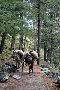 Mountain walk by Sumit Mehndiratta