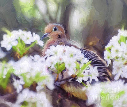 Mourning Dove In Spring Blossoms by Kerri Farley