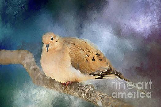 Mourning Dove of Winter by Darren Fisher