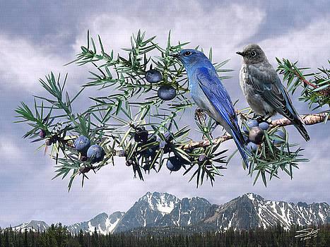 Moutain Bluebirds and Juniper by Matthew Schwartz