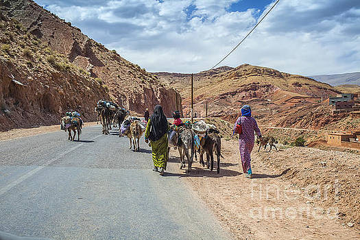 Patricia Hofmeester - Moving live stock and goods in Morocco