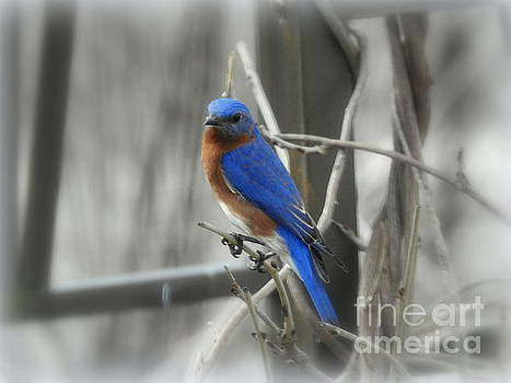 Mr. Bluebird by Brenda Bostic