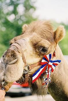 Mr. Camel by Cheryl Vatcher-Martin